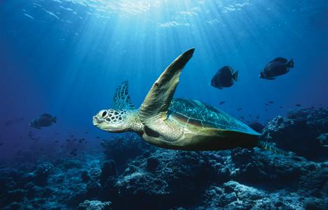 Les océans, les mers